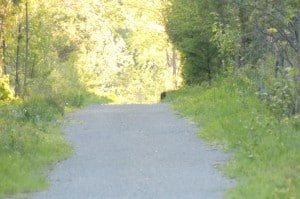 Cougar - Trans-Canada Trail (Luke Berg)