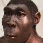 model of Homo erectus - my 50,000-greats-grandfather
