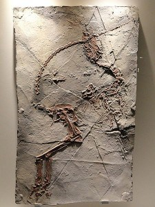 Sinosauropteryx prima feathered dinosaur plate Early Cretaceous Yixian Formation Liaoning China