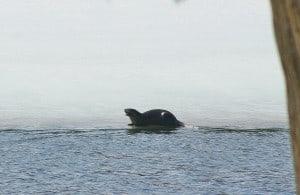 Otter -  Karen Pero Cooper