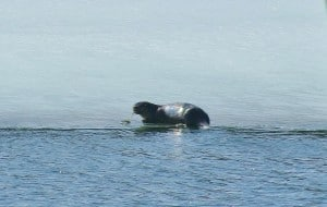 Otter 2 Karen Pero Cooper