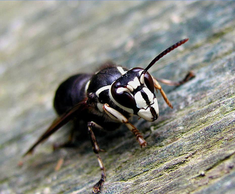 Invertebrates – Our Changing Seasons