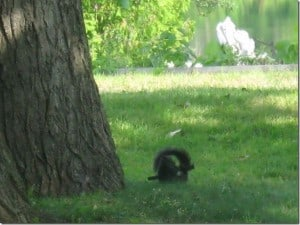 Gray Squirrel at play - Betty Mitchell