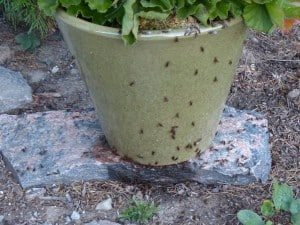 Ant swarm Sept. 21 Chemong Lake (Don McLeod)