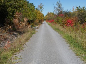 Rotary Greenway Trail where it traverses the Promise Rock Nature Area -Drew Monkman