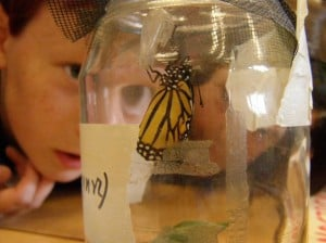 Students watching Monarch emerge from chrysalis -Sept. 2007 Drew-Monkman