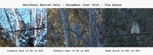 Dec. 21st 2104 - Barred Owls - Tim Dyson