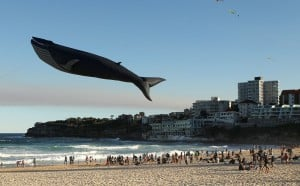 A blue whale kite soars at a festival in Sydney, Australia  – a life-size replica of the largest animal that has ever existed.  The other species in this photo has decoded its own origins, understands the plight of the blue whale, and can foresee far-future events.  Mark Metcalfe, Getty Images
