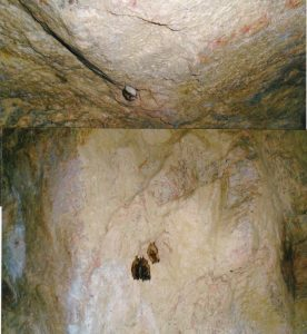 Bats in abandoned mine near Flynn's Corner - Oct. 13, 2016 - Marie Windover