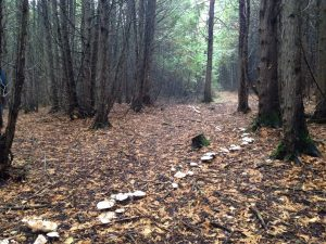 Fungi trail in Douro - October 16, 2016 - Alan Stewart
