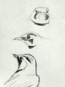Quick sketches work best. You don't have to draw the whole bird . Sketch by Kelly Dodge.
