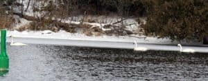 Possible Tundra Swans on Otonabee R. - Dec. 13, 2016 - Gwen Forsyth