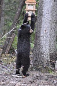 Mature uncut bear pay per minute