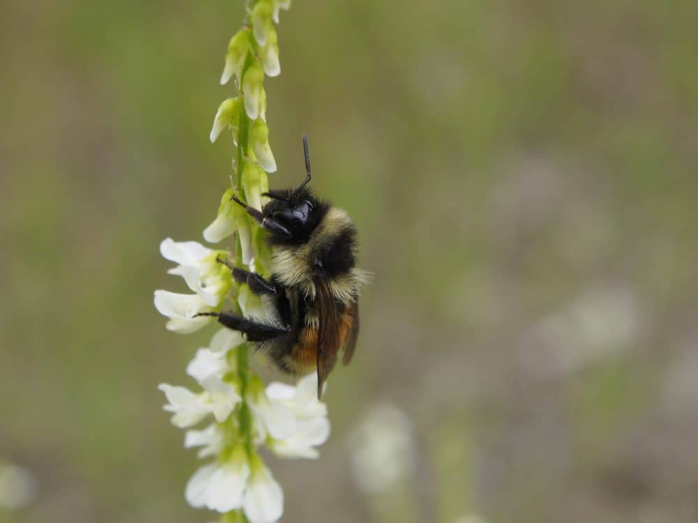 bees – Our Changing Seasons